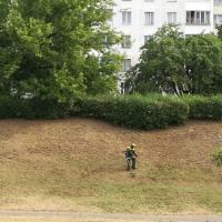 Минчане требуют изменить правила покоса травы в городе