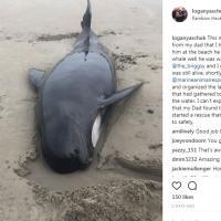 Канадцы спасли кита в первый день нового года