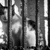 Приравнены к мусору на улицах: как решить проблему с бездомными животными в Минске?