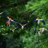 WWF посчитал, сколько денег приносит природа. $125 трлн в год