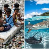 Важный день: в ООН обсуждают план защиты океанов, Индия меняет отношение к мусору