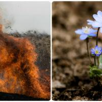 Первые жертвы весны: не покупайте первоцветы и отложите спички в сторону!