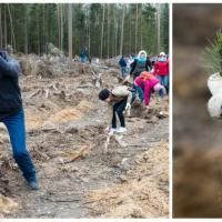 Мечи в руки, сапоги на ноги: с саженцами в лес вышло рекордное количество беларусов!