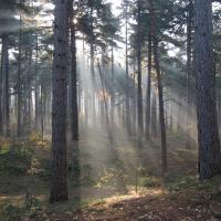 Что изменится в лесной отрасли с внедрением госпрограммы «Беларусский лес»?