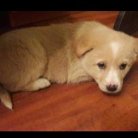 Волонтёры из Речицы достали щенка из коллектора: подробности операции, которая длилась двое суток