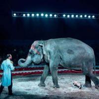 Слониху Майю пытались освободить зоозащитники со всего мира. Она умерла в Гомеле, её переработали на мясо-костную муку