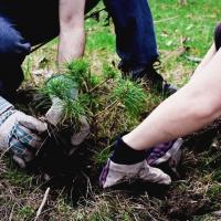 10 миллионов деревьев высадят в Гродненской области