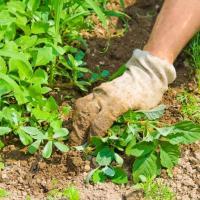 Советы для дачников. Как избавиться от сорняков и нежелательных насекомых максимально дёшево и экологично