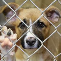 Зоозащитники об изменениях в работе милиции: «Собаку будут резать во дворе, а вы сможете только пожаловаться в исполком!»