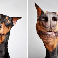 Как заработать плюс в карму в год Собаки?