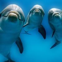 Ко Дню китов и дельфинов. Четыре доказательства того, что дельфины и правда крутые