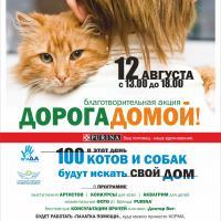 Летняя благотворительная выставка бездомных животных «Дорога домой»