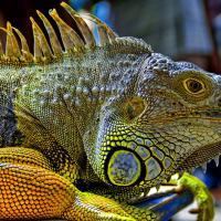 Как студент-биолог из Минска защищает рептилий на выставках