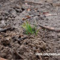 В Минской области продолжается акция «Неделя леса»