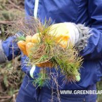 У Беларусі правядуць «Тыдзень лесу», прысвечаны 30-годдзю аварыі на Чарнобыльскай АЭС