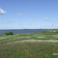 Экотуризм на беларусском Севере: в гости к бакланам и лосям на озеро Освейское