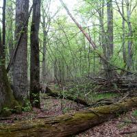Национальному парку «Припятский» 47 лет: интересные цифры и факты