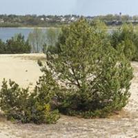 Туристов приглашают разгадать тайны песчаных дюн Прибужского Полесья