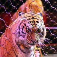 Президент Мексики освободил цирковых животных