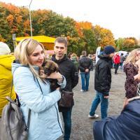 Найти дорогу домой. 28 животных из приютов нашли любящие семьи