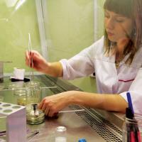 В Беларуси впервые клонировали и укоренили ель