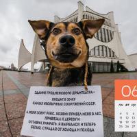 Зоозащитники из Гродно сделали антикалендарь и отправили его правительству (фотофакт)