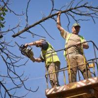 Степень аварийности деревьев поможет определить новая шкала
