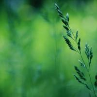 «Почва – это живой организм». Почему важно заниматься органическим сельским хозяйством