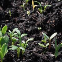 Осушение торфяников приводит во всем мире к росту выбросов парниковых газов