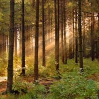 Международная сертификация даёт возможность общественности контролировать ведение лесного хозяйства в Беларуси