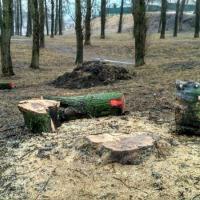 «Зеленбуд» могуць пакараць за наўмыснае пашкоджанне газона ў Котаўцы