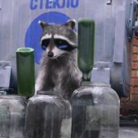 Беларусы сняли видеоролик с енотами, знающими толк в сортировке мусора