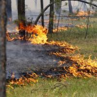 У беларускіх лясах пачалі дзейнічаць новыя правілы пажарнай бяспекі