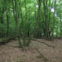 В Положении о национальном парке «Припятский» учтут предложения общественности