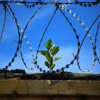 Диалог может закончиться. Глобальные Зелёные требуют от властей Беларуси прекратить политические репрессии