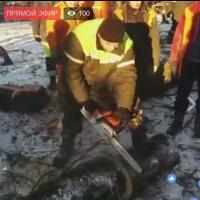 Противостояние в Котовке: прямо сейчас рубят деревья, несмотря на отчаянное сопротивление местных жителей