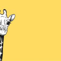 Жирафы бесшумно вымирают, страны Африки не способны их защитить