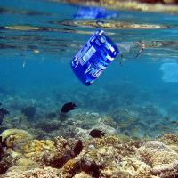 Кто и как спасает океаны. Пять инициатив в поддержку морской жизни
