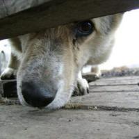 Мнение. Ветеринарные правила должны защищать животных от нерадивых хозяев, но под ударом оказываются те, кто спасает «потеряшек»