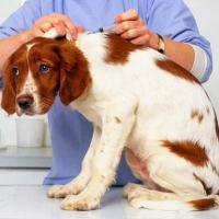 Бешенство: как защитить себя и животных, на какие симптомы обращать внимание