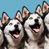 Коммерческое клонирование домашних животных уже не фантастика