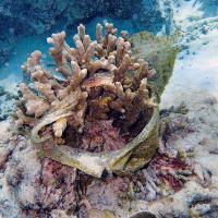 Пластик убивает коралловые рифы