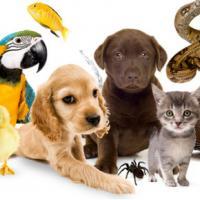 Три причины не заводить домашнее животное