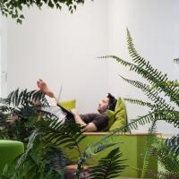 Крупные компании превращают свои офисы в ботанические сады