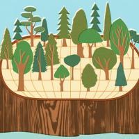 Глобальный курс на озеленение: сажаем новые леса, развиваем агролесничество.