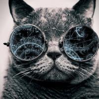 Как кошки правят миром: приметы и суеверия