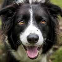Владельцы собак реже умирают от сердечных заболеваний