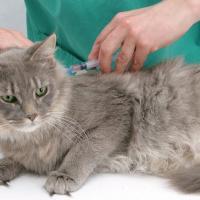 Вакцинация домашних животных: лучше поздно, чем никогда