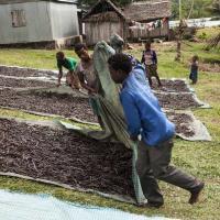 Ванильные войны Мадагаскара. Люди убивают друг друга и уничтожают леса из-за специй