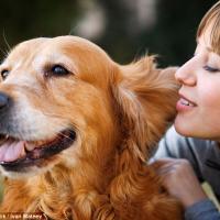 «Сюсюканье» с собаками действительно помогает укрепить привязанность